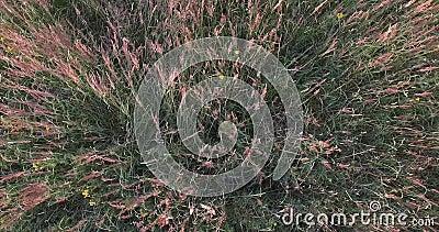 Поле желтых цветков Ветер шуршая зеленой травой Розовые цветки цветений взгляд сверху видеоматериал