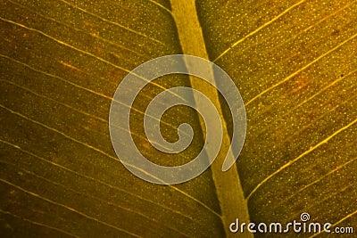 Поднимающее вверх листьев близкое