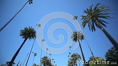 Привод пальмы
