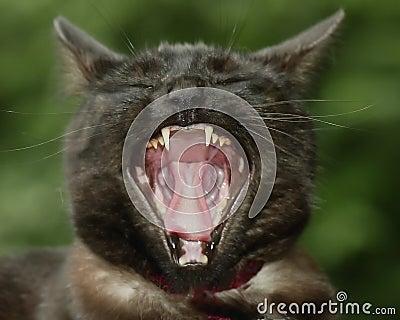 пробуренный кот