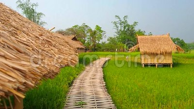 Прогулка по бамбуковому мосту, пригород Чианг Рай, Таиланд акции видеоматериалы