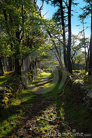 Прогулка пущи