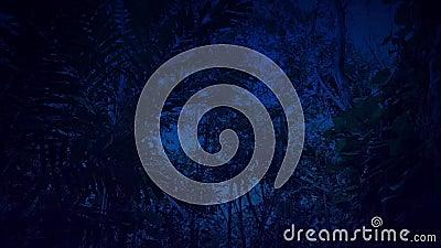 Проходить перерастанную сторону скалы в джунглях на ночу сток-видео