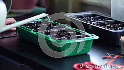 Процесс подготовки к посадке семян в черно-пластиковый контейнер Женщина поливает саженцы из поливающего банка акции видеоматериалы