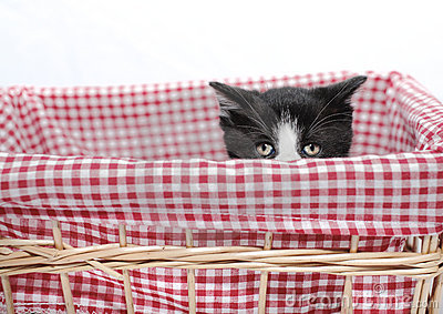 пряча котенок