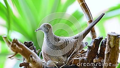 Птичья плита, голубь или рассеивание в природе акции видеоматериалы