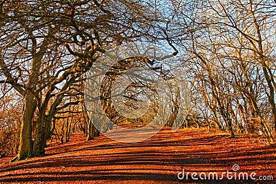 Путь леса