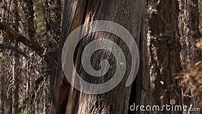 пуща 2 Влияние 5 d - moving деревья видеоматериал