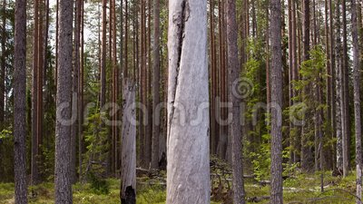 пуща 2 Влияние 5 d - moving деревья сток-видео