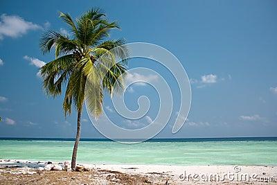 Рай острова - пальма