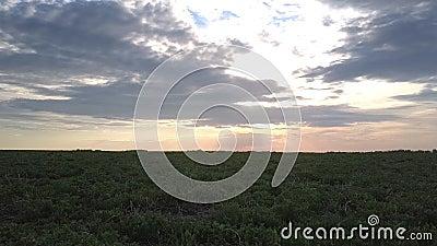 Рай темного военно-морского флота пасмурный над безграничными полями после захода солнца видеоматериал