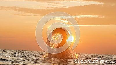 Рассвет в море, стада птиц летит над водяными крыльями, красочными пейзажами, природой летом на рассвете акции видеоматериалы