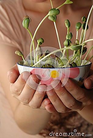 расти фасолей