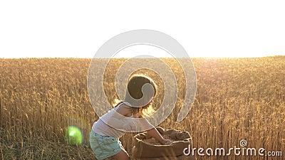 Ребенок держит зерно на ладони маленький сын, дочь фермера, играет на поле маленький ребенок играет в зерно видеоматериал