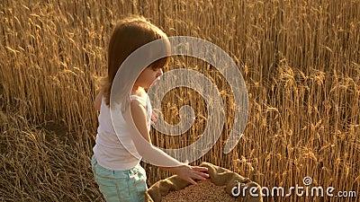 Ребенок с пшеницей в руке Ребенок держит зерно на ладони Маленький сын, дочь фермера, играет на поле сток-видео