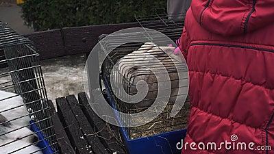 Ребенок штрихует большого белого кролика сидя в клетке металла Любимцы ребенк большой сметанообразный зайчик в клетке утюга сток-видео