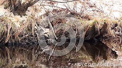 река 3 сток-видео