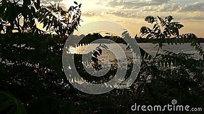 Речной берег ночи покрытый с зеленым заболоченным местом, акацией, Reed, на заходе солнца в 4k видеоматериал