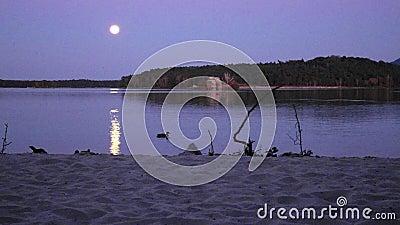 Романтичная ноча полнолуния на озере, спокойный уровень воды с луной излучает Утки плавая на озере сток-видео