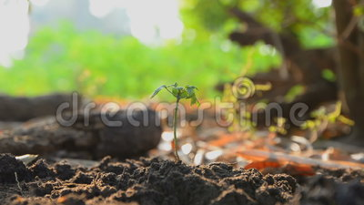 Руки женщины засаживая семена на земле смололи и намочили с звуком природы окружающим видеоматериал