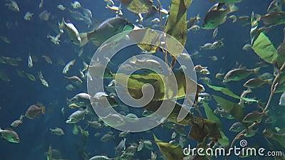 Рыбы и жизнь растений сток-видео