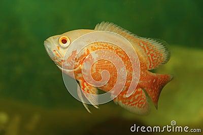 рыбы тропические
