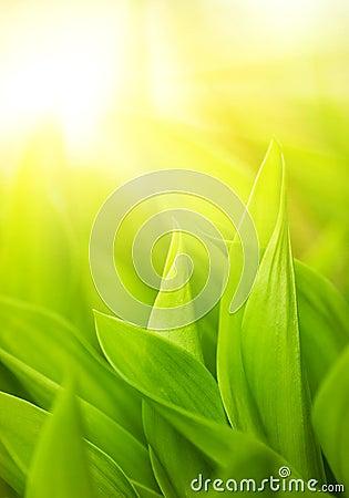 свежий зеленый цвет травы