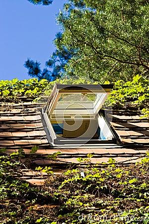 светлая крыша