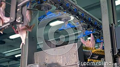Связанные тела цыпленка проходят обрабатывающее оборудование акции видеоматериалы