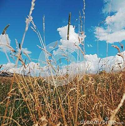 Северные поля Karelia Стоковое Фото - изображение: 75022795: https://ru.dreamstime.com/стоковое-фото-северные-по-я-karelia-image75022795