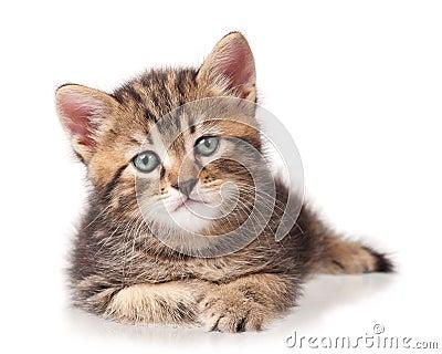 Серьезный котенок