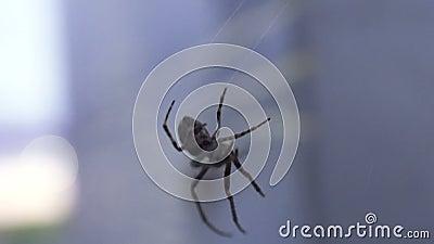 Сеть паука закручивая, сетчатое соединение, природа живой природы, окружающая среда, arachnophobia акции видеоматериалы