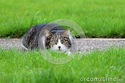 Скрываясь кот
