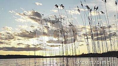 Слайдер снял силуэта тростников озера золотого над эффектным небом во время захода солнца видеоматериал