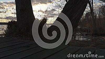 Слайдер снял стороной деревьев озера показывая и вегетации озера видеоматериал