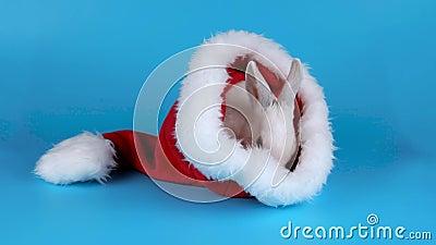 Смешной зайчик моя его сторону в шляпе Санта Клауса акции видеоматериалы