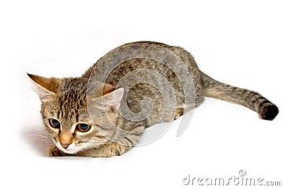 Смешной striped котенок.