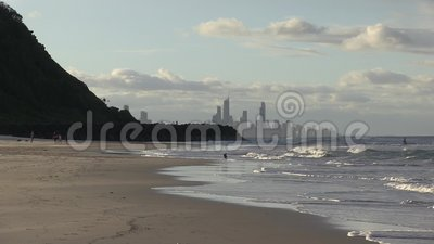 Собака бежит для шарика, рано утром, на Palm Beach, австралиец Gold Coast сток-видео