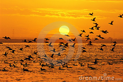 солнце птиц