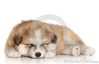 Сон щенка akita-inu