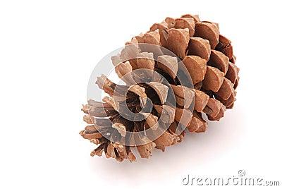 сосенка конуса