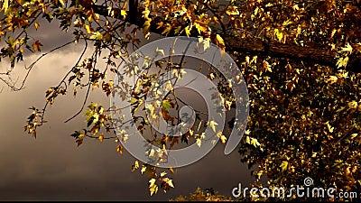 Солнечные листья дерева и загадочное небо сток-видео