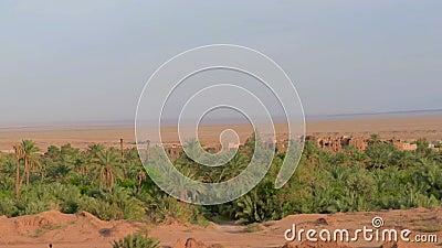 старая деревня самана расположенная в оазисе видеоматериал
