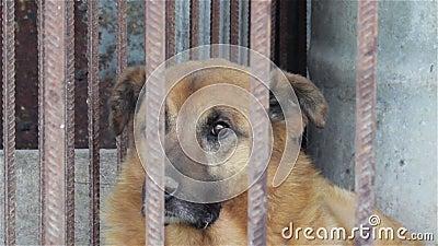Старая собака в клетке сток-видео