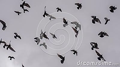 стая птиц большая акции видеоматериалы