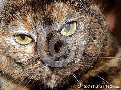 сторона кота