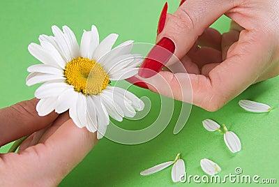 стоцвет