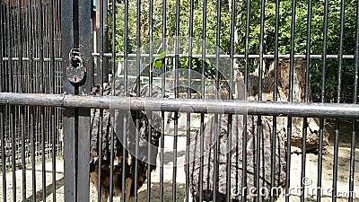 Стриши с длинной шеей в зоопарке Посмотрите на посетителей акции видеоматериалы
