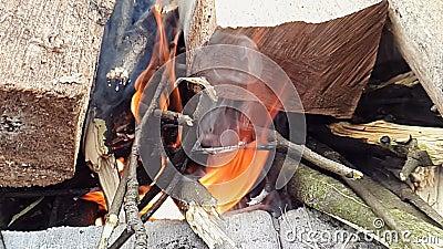 Супер огонь ожога замедленного движения от древесины в лесе акции видеоматериалы