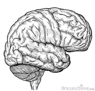 человеческого мозга